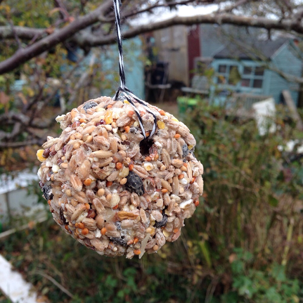 How can we help birds in our gardens? | Spade Fork Spoon