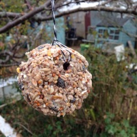 How can we help birds in our gardens?