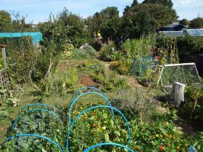 allotment august