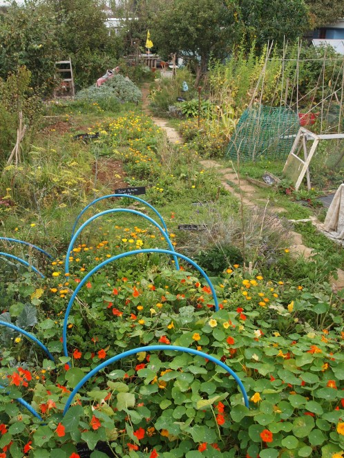 october allotment