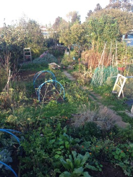 allotment november